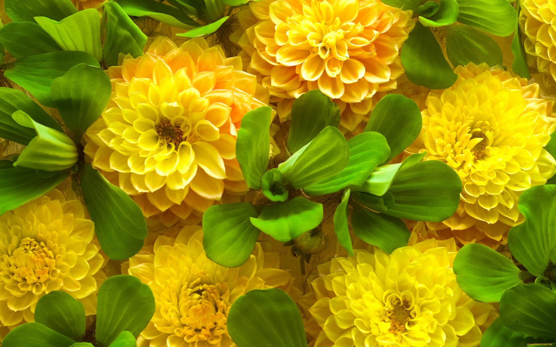 Яркие красивые цветы фото